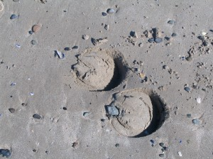 hoof prints on sand