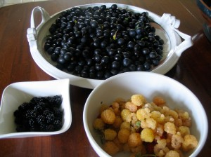 3 white bowls with sloes, raspberries and blackberries