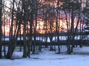 Sun setting through trees with snow on ground