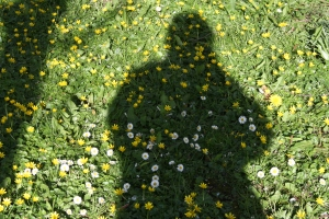 photograph of shadow on lawn with daisies