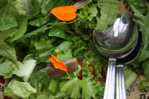 Salad from the polytunnel