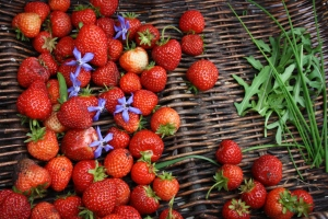 strawberries, borage flowers, rocket and chives