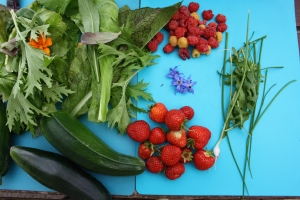 Courgettes, salad leaves, raspberries, strawberries, borage flowers, rocket, chives, scallions