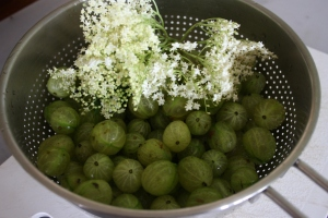 Gooseberries and elderflowers