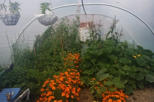 a view of the polytunnel