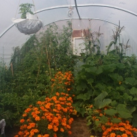 The Polytunnel - Month 4