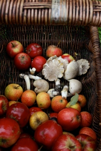 mushrooms and apples in basket