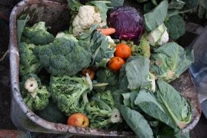 Wheelbarrow full of fruit and veg