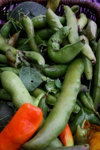 beans, peppers, squash in basket