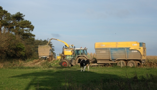 Combine harvester and 2 tractors with trailers