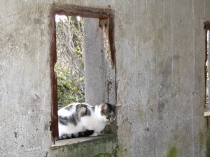 Cat sitting in window