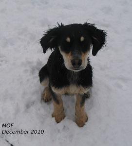 Winnie sitting in snow