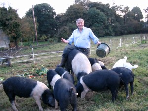 Alfie and pigs