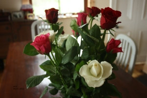 Red, White & Pink Roses
