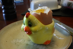 Boiled egg in chicken egg cup