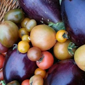 aubergines (eggplant) tomatoes