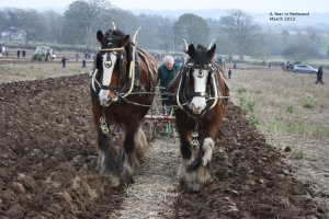Horses and plough