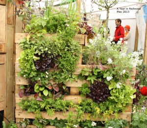 herbs and lettuce growing on pallet