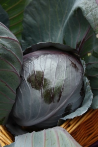 Home-grown Red Cabbage