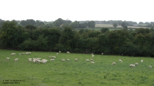 Sheepwalk Farm