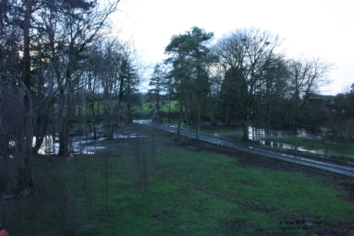 Flooded Lawns February 2014