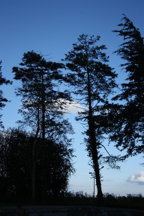 Back trees