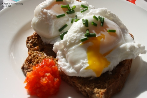 Freshly Poached Egg