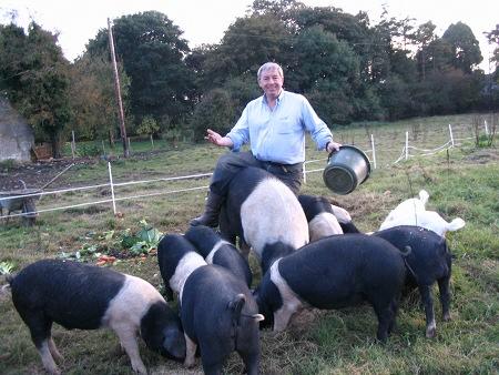 Alfie & Pigs