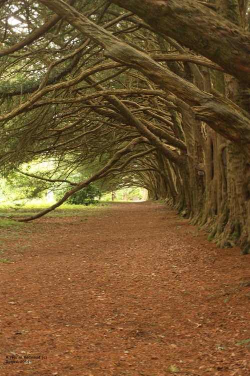 Huntington Castle - Yew Walk