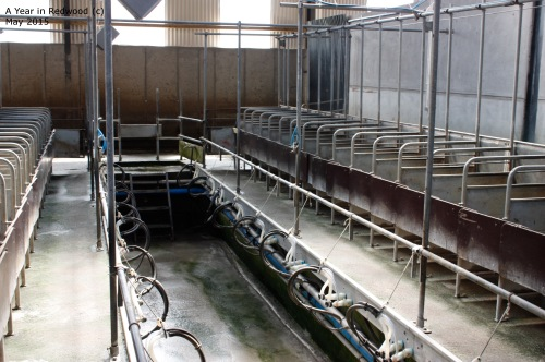 Purpose built Milking Parlour