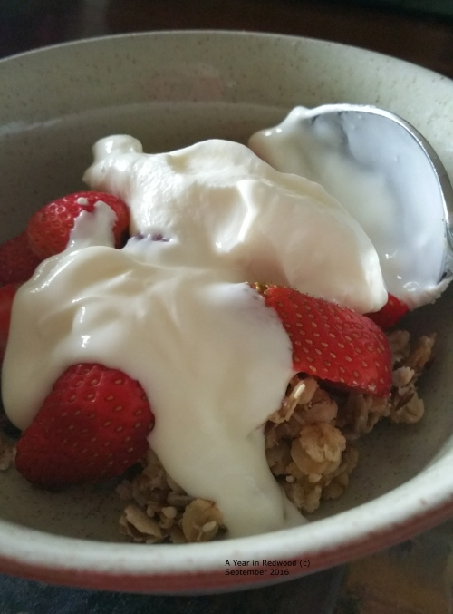 Oldfarm Granola with yoghurt and homegrown strawberries