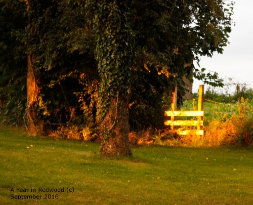 Evening light in garden