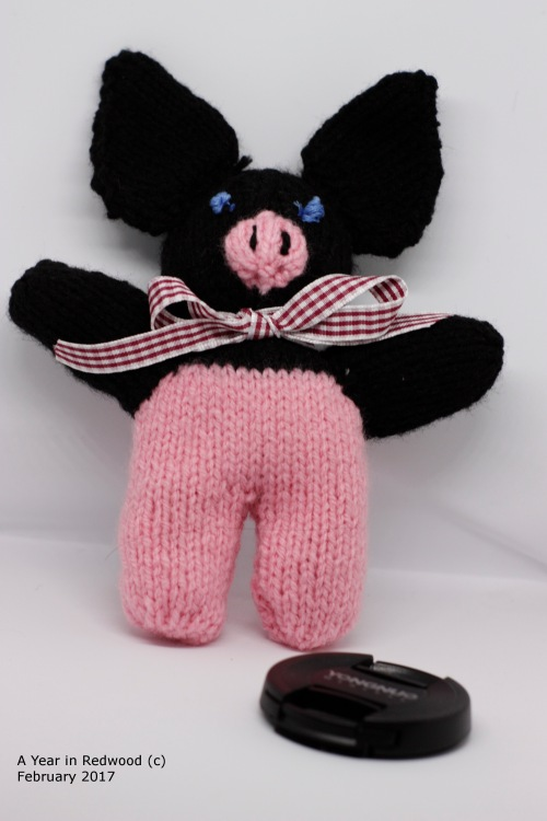 A Knitted replica of our first boar, Clarence!